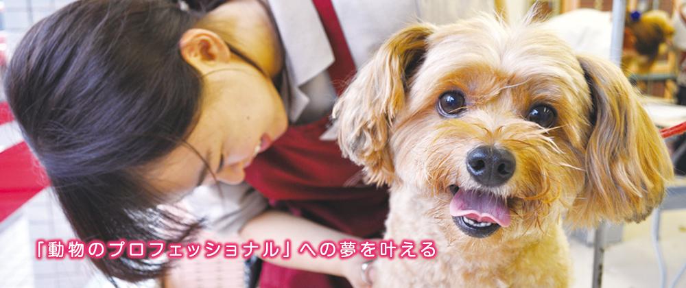 TPG富山国際ペットビジネス学院「動物のプロフェッショナル」への夢を叶える