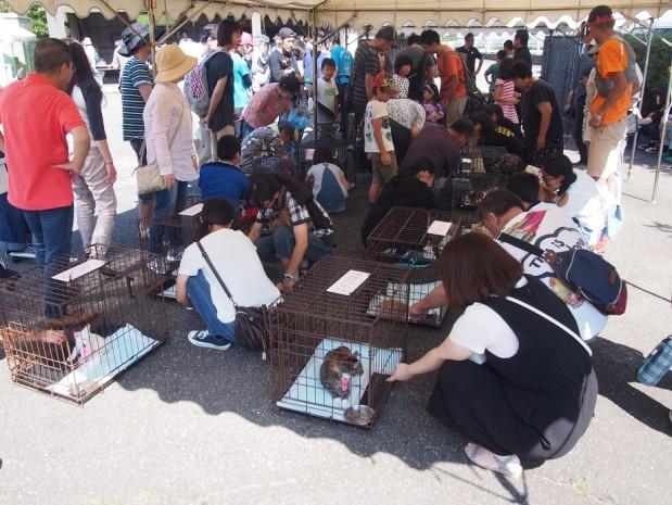 H29 9月24日 富山県動物愛護フェスティバル 3
